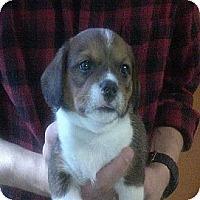 Adopt A Pet :: Mugsy - Hop Bottom, PA
