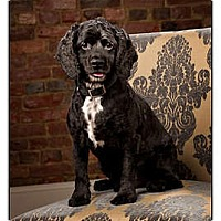 Adopt A Pet :: Jackson - Owensboro, KY