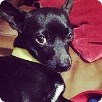 Adopt A Pet :: Jack Daniels - Austin, TX