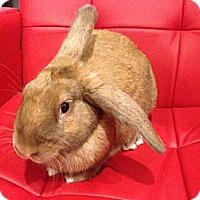 Adopt A Pet :: Wrangler - Los Angeles, CA