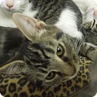 Adopt A Pet :: Sparkle - Medina, OH