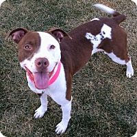 American Pit Bull Terrier Mix Dog for adoption in Bryan, Texas - Molly