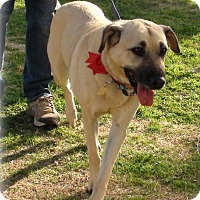 Adopt A Pet :: Carrie - Grass Valley, CA