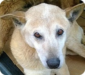 Shepherd (Unknown Type) Mix Dog for adoption in Emory, Texas - Rummie