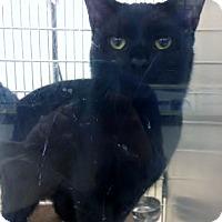 Adopt A Pet :: Jerome - Byron Center, MI