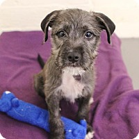 Adopt A Pet :: Mazel Tov - Smyrna, GA