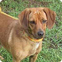Adopt A Pet :: Addy - Elmwood Park, NJ