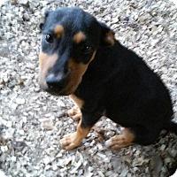 Adopt A Pet :: Matilda meet me 10/3 - Manchester, CT