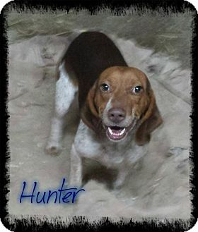 Hound (Unknown Type) Dog for adoption in Crandall, Georgia - Hunter