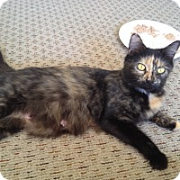Adopt A Pet :: Miss Kitty - Horsham, PA