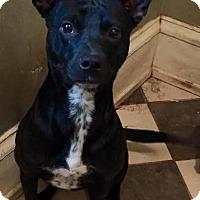 Adopt A Pet :: Bat girl(CL) - Greensboro, NC