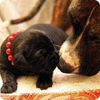 Adopt A Pet :: Endora - Greensboro, NC