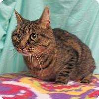 Adopt A Pet :: Vera - Waldorf, MD