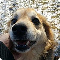 Adopt A Pet :: Wonder Mutt - Lisbon, OH