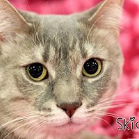 Adopt A Pet :: Skidds & Tuxe (bonded pair) (Sponsored Free) - knoxville, TN