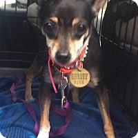 Adopt A Pet :: Diamond - Oak Ridge, NJ