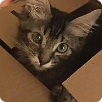 Adopt A Pet :: Liam - Mission Viejo, CA