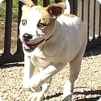 Adopt A Pet :: Axle - Cincinnati, OH