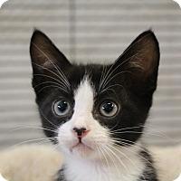 Adopt A Pet :: Gopher - Sarasota, FL