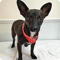 Adopt A Pet :: Cosmo - Groton, MA