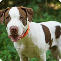 Adopt A Pet :: Javier - Richmond, VA