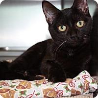 Adopt A Pet :: Lacey - Richmond, VA