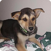Adopt A Pet :: Sparky - Denver, CO