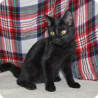 Adopt A Pet :: Tilly - South Haven, MI