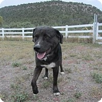Adopt A Pet :: Zeus - Ridgway, CO