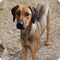 Adopt A Pet :: GRAHAM - Panama City, FL
