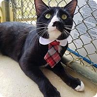 Adopt A Pet :: Dean - Umatilla, FL