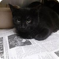 Adopt A Pet :: Jo - Northfield, OH