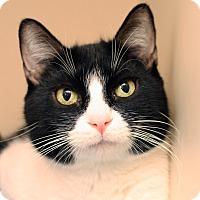 Adopt A Pet :: LIBBY - Royal Oak, MI
