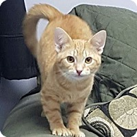 Adopt A Pet :: Ms. Razzmatazz - Hawk Point, MO