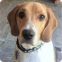 Adopt A Pet :: Manny - Houston, TX