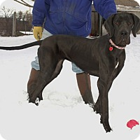 Adopt A Pet :: Mya - Pearl River, NY