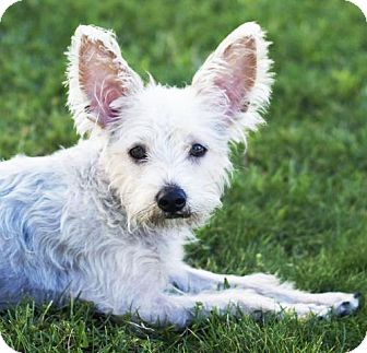 Terrier (Unknown Type, Medium) Mix Dog for adoption in San Diego, California - Liberty