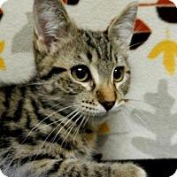 Adopt A Pet :: Rocky - Tyler, TX