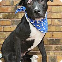 Adopt A Pet :: Billy Boy - Benbrook, TX
