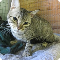 Adopt A Pet :: Alvin - Kingston, WA