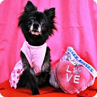 Adopt A Pet :: *PRINCESS - Sugar Land, TX