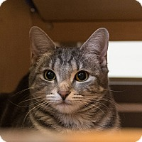 Adopt A Pet :: Lorax - Houston, TX