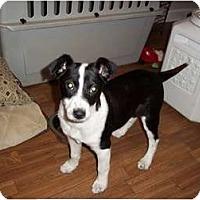 Adopt A Pet :: Montana - Adamsville, TN