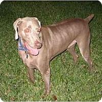 Adopt A Pet :: Kobe - Eustis, FL