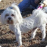 Adopt A Pet :: *London & Talia PENDING - Westport, CT