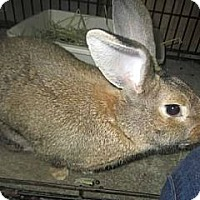 Adopt A Pet :: Tank - Williston, FL