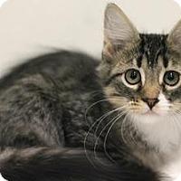 Adopt A Pet :: Suzy-Q - Sacramento, CA