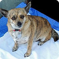 Adopt A Pet :: Willa - Tumwater, WA