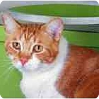 Adopt A Pet :: Mars - Marietta, GA