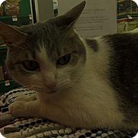 Adopt A Pet :: Precious - Hamburg, NY